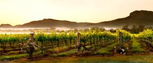 Broke Fordwich Wine Region Hunter Valley