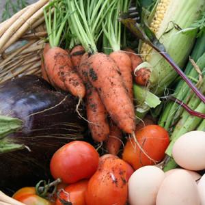 Mottys Farms Cuisine, Broke Catering